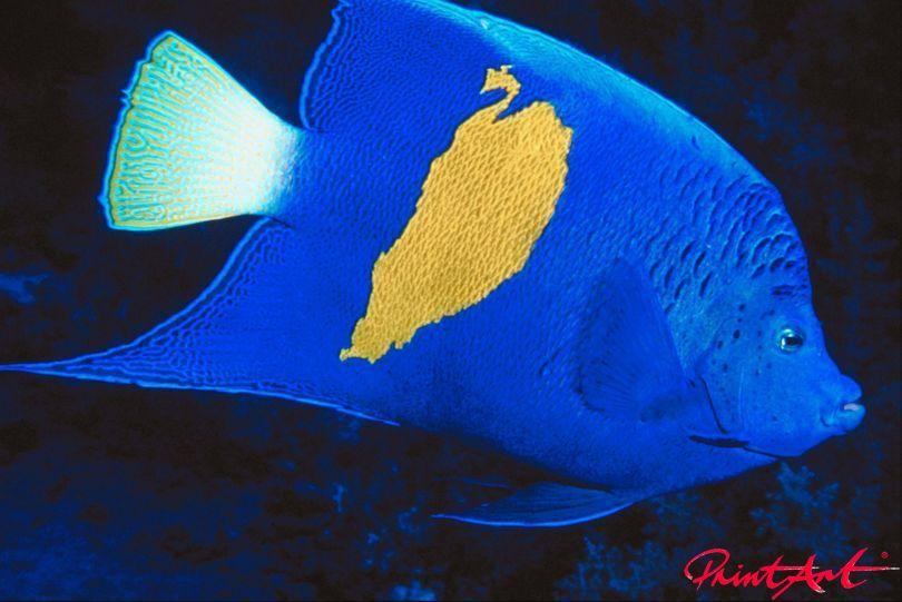 blau mit gelbem Fleck Meerestiere