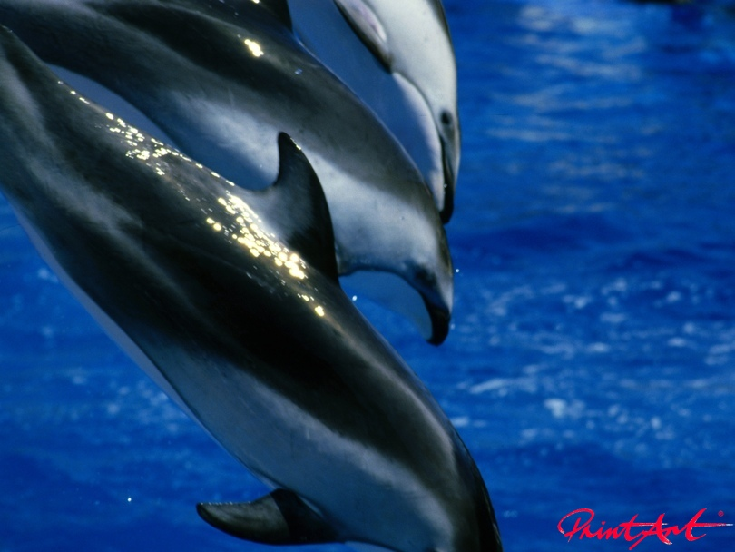 Delphin Trio Meerestiere