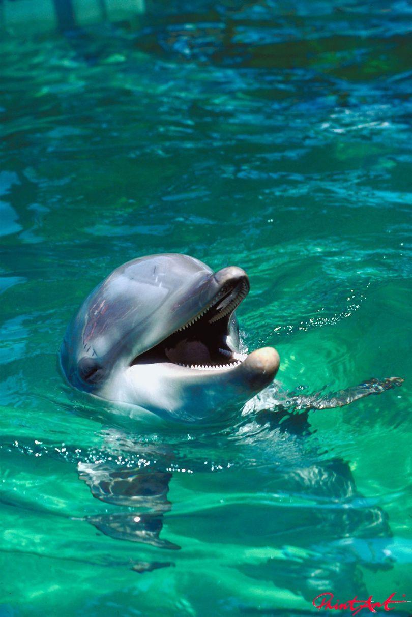 Flipper Meerestiere