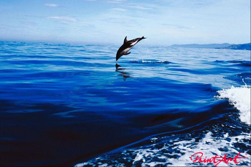 Delphin vor dem Eintauchen Meerestiere