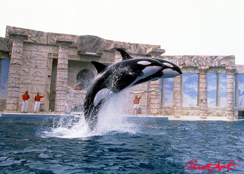 Orca Duo Meerestiere