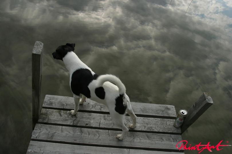 Hund auf Steg Hunde
