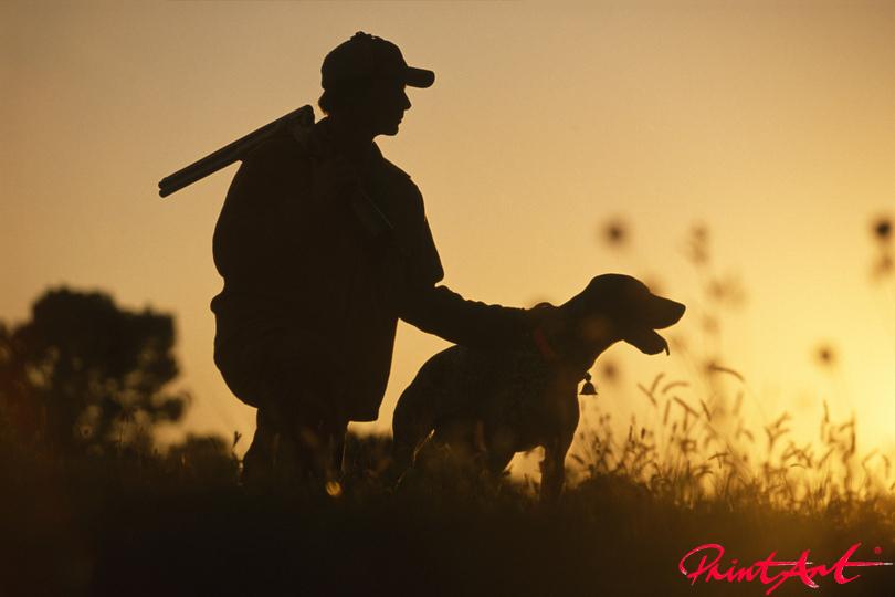 Auf der Jagd Hunde