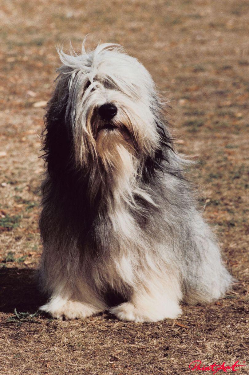 Wuselhund Hunde