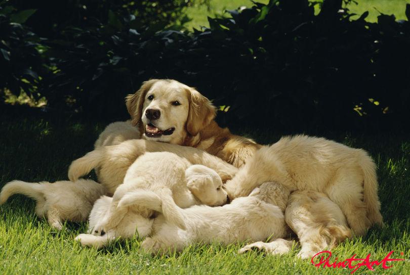 Hundemutter mit Welpen Hunde