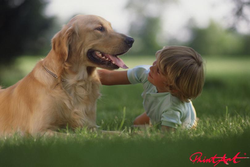 Retriever mit Kind Hunde