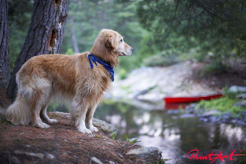 vor Baummstamm Hunde