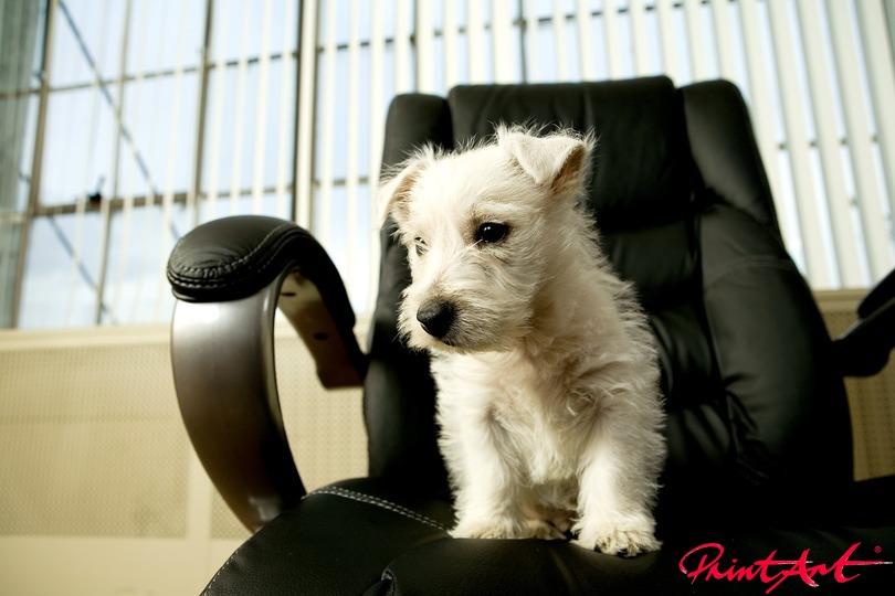 Buerohengst Hunde
