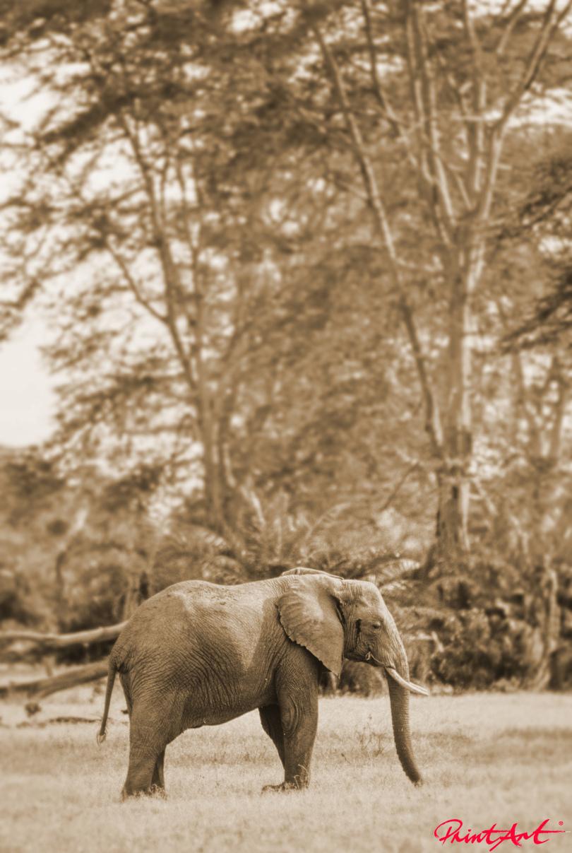 Elefant in braun Wildtiere