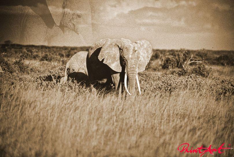 Elefant gespiegelt Wildtiere