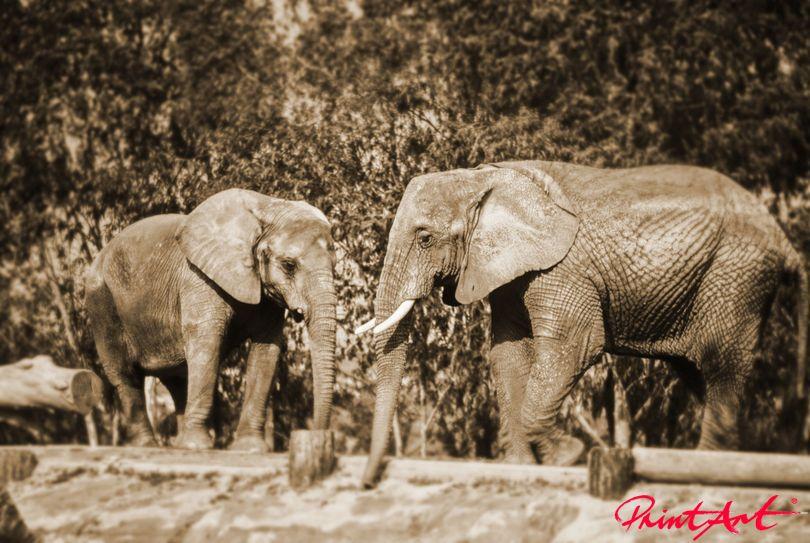 Elefantenpaar Wildtiere