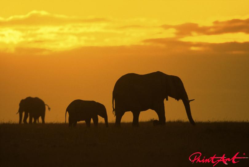 Trio vor Sonne Wildtiere