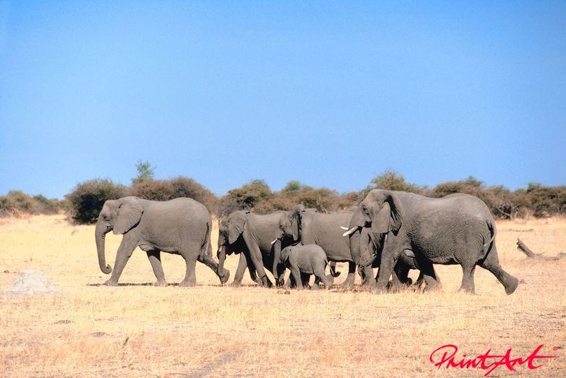 Elefantenherde Wildtiere