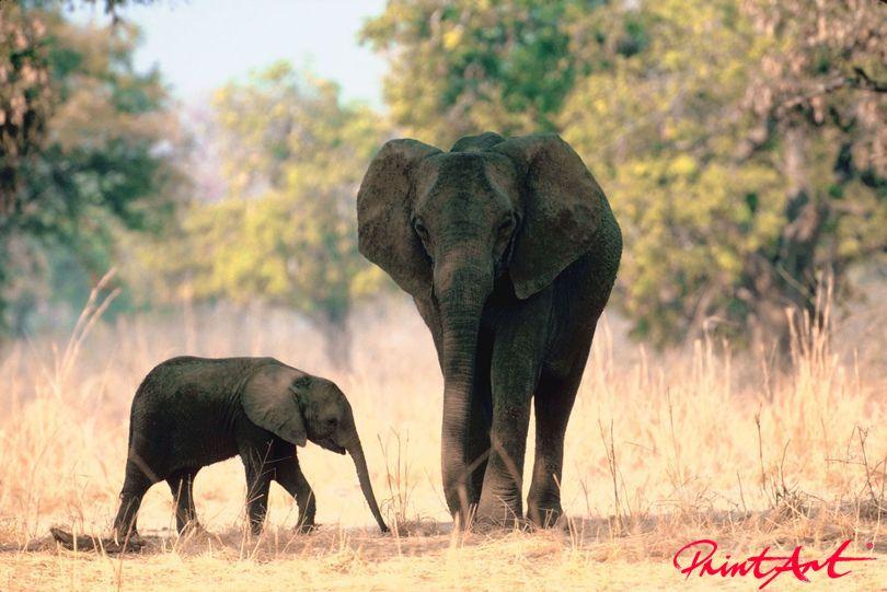 Elefant mit Baby Wildtiere