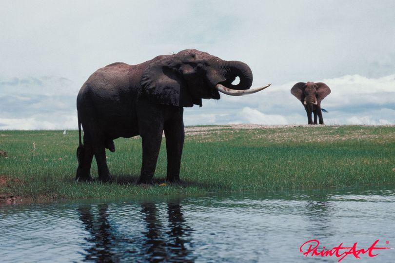 am Wasser Wildtiere