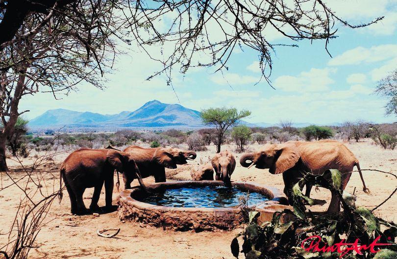 am Brunnen Wildtiere