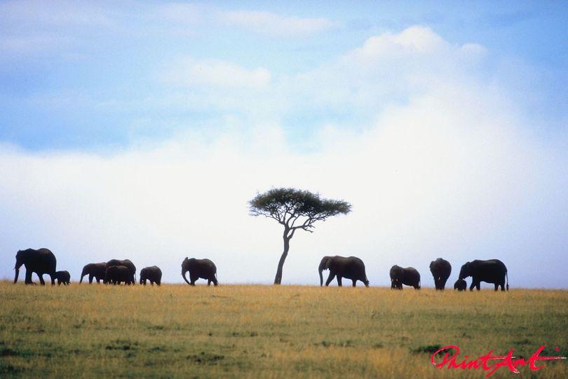 Elefanten auf Hügel Wildtiere