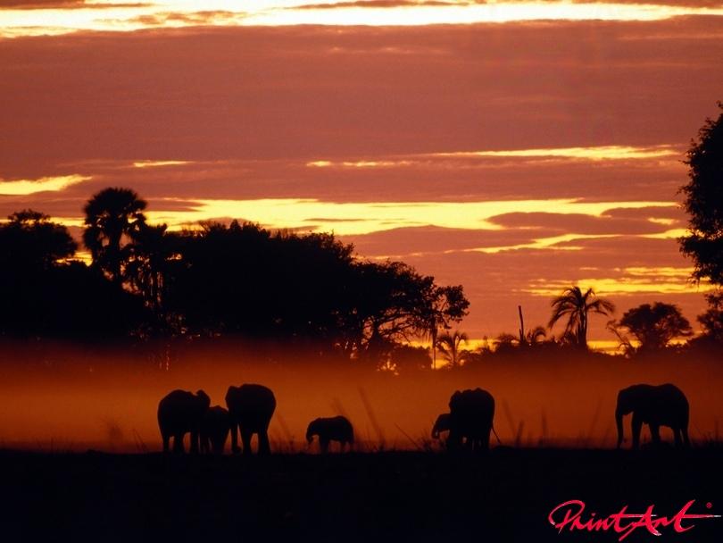 Herde im Sonnenuntergang Wildtiere