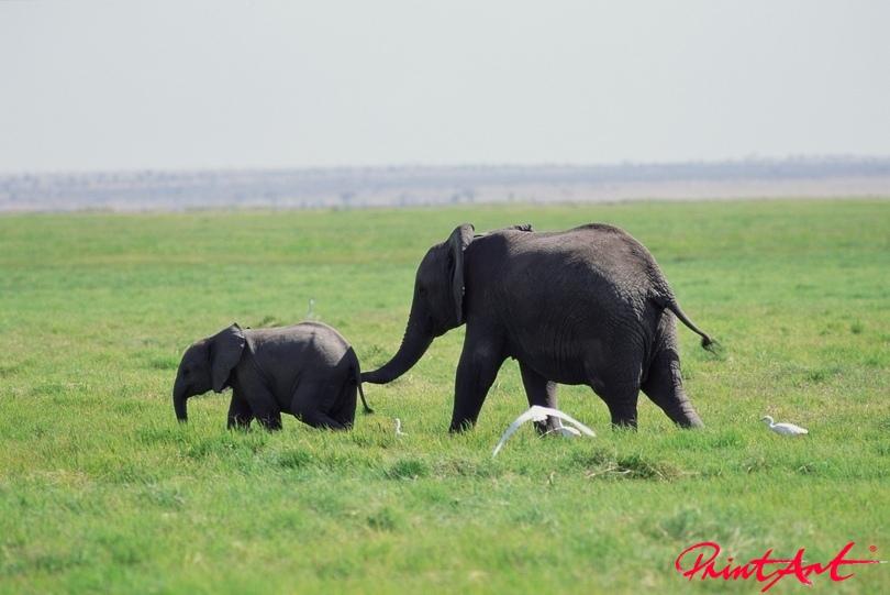 Mutter mit Kind Wildtiere