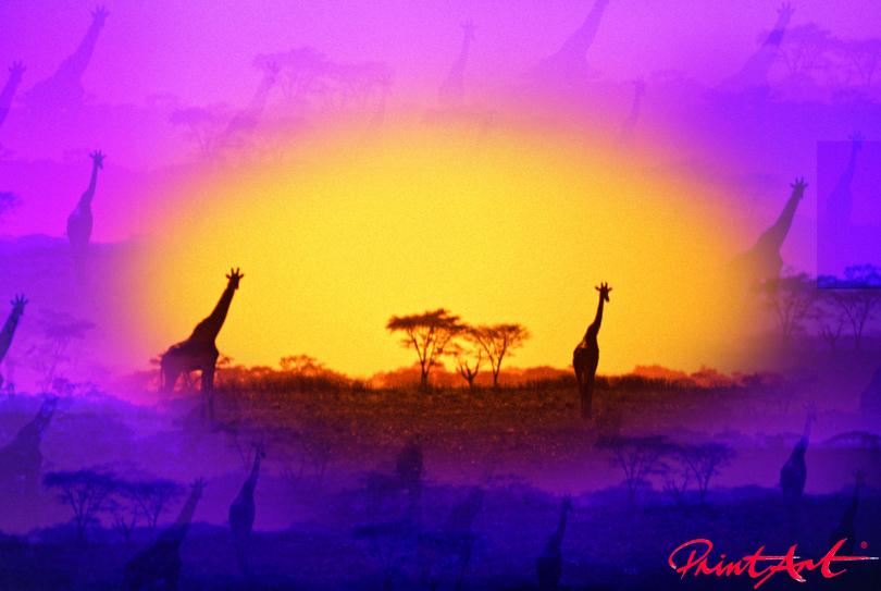 Giraffe abstrakt Wildtiere