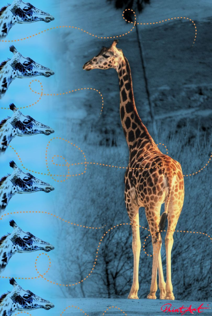 Giraffe in blau Wildtiere