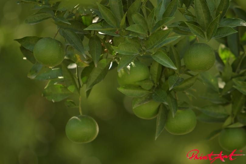 gruene Frucht Essen