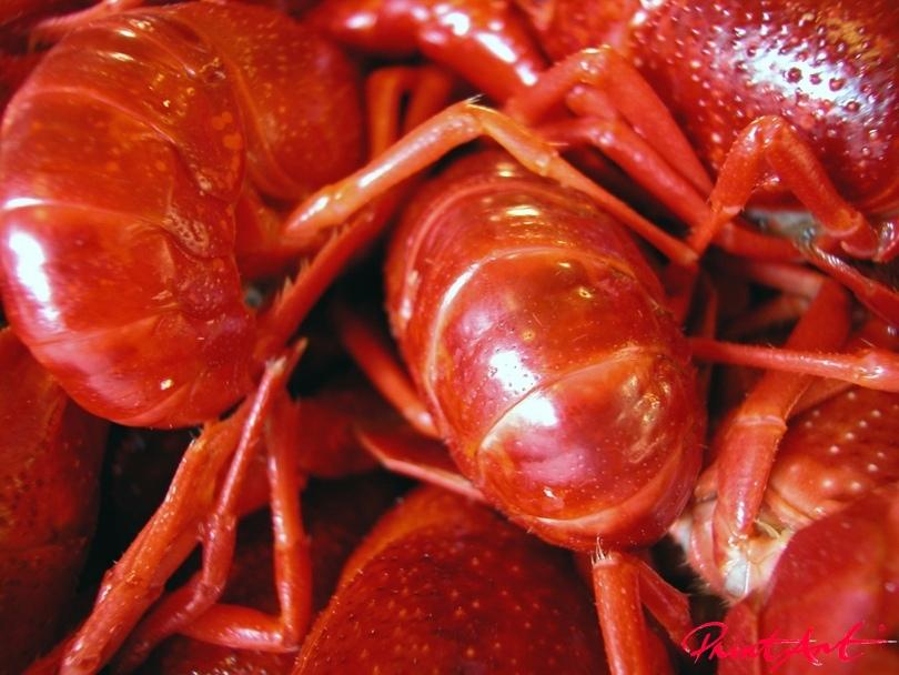 Krabben pur. Essen