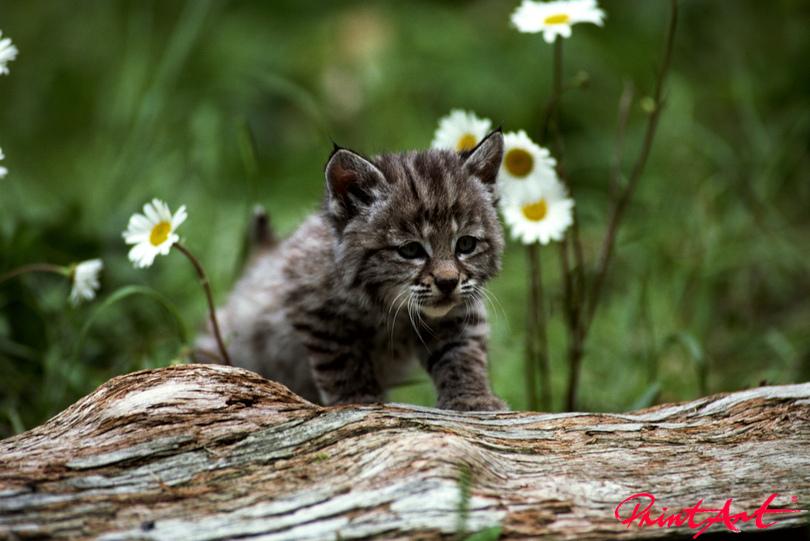 Kätzchen Blume Tierbabys