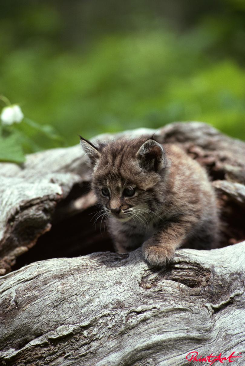 Kätzchen auf Baumstamm Tierbabys