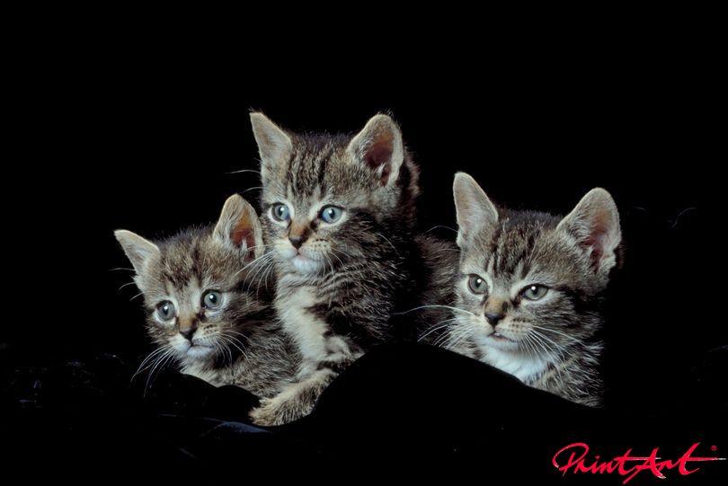 getigerte Katzenbabys Tierbabys