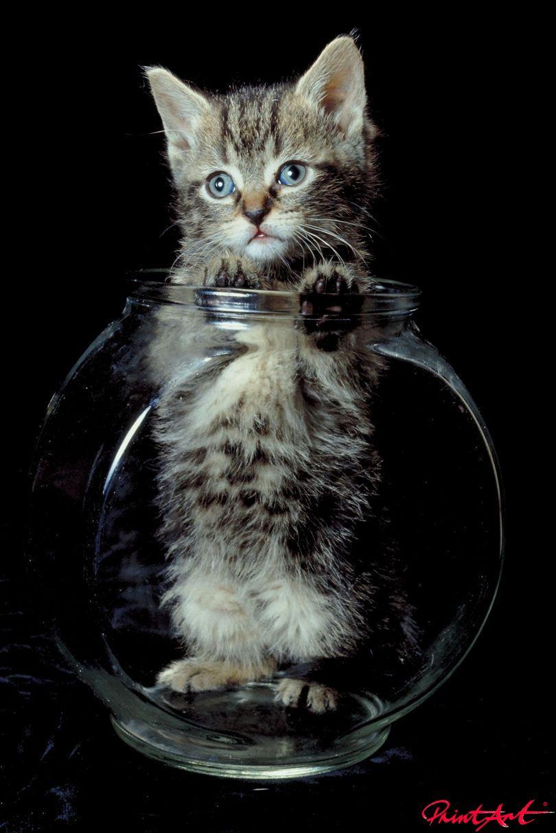 Katzenbaby Vase Tierbabys