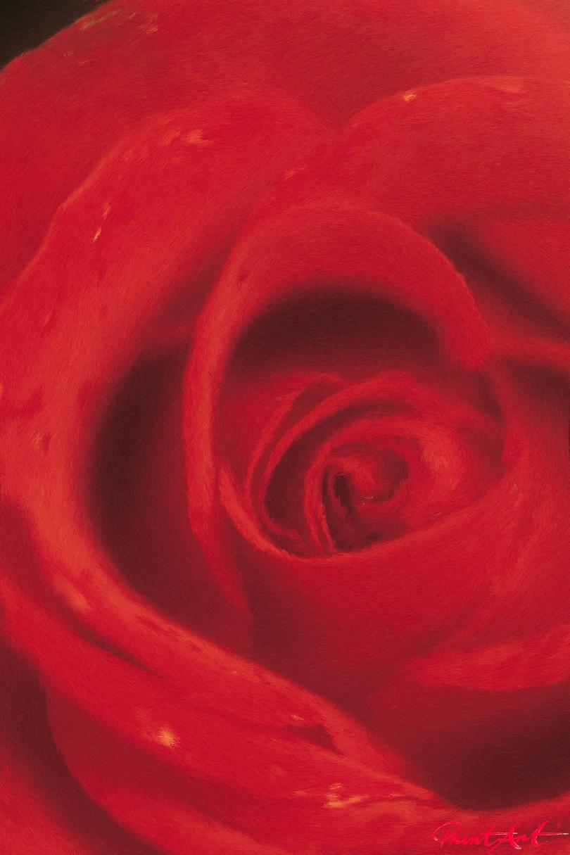 Redrose Blumen