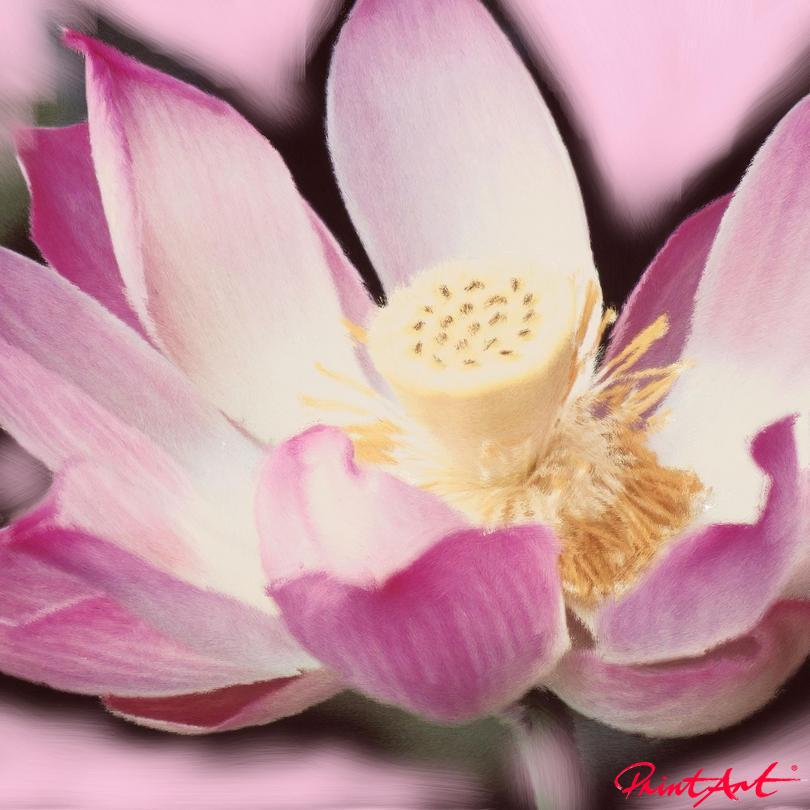 Seerose I Blumen