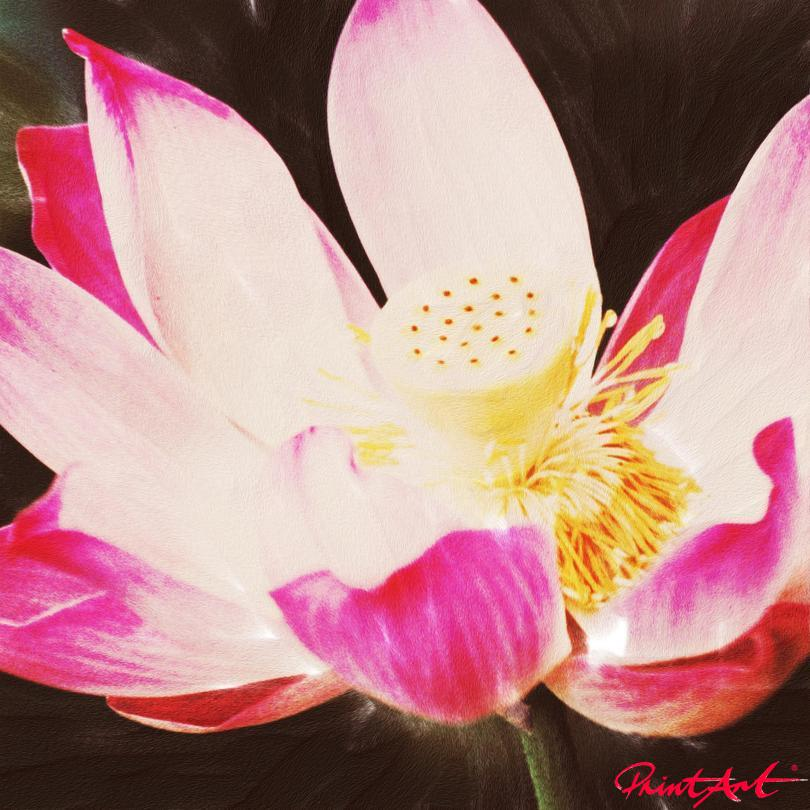 Seerose II Blumen