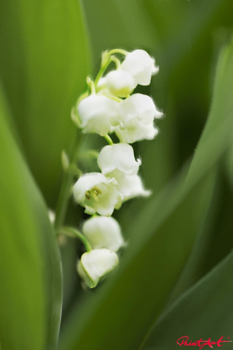 Weisse Blümchen Blumen
