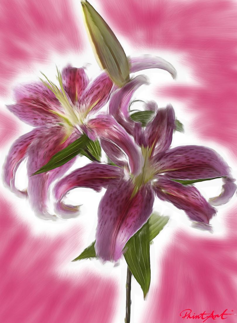 Pink Lilie Blumen