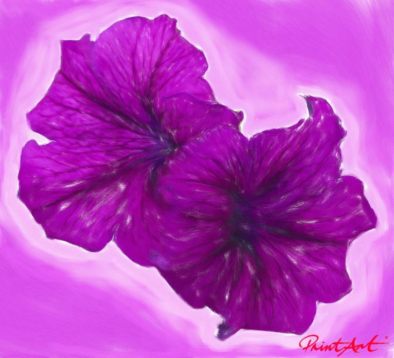 Lila Flowers Blumen