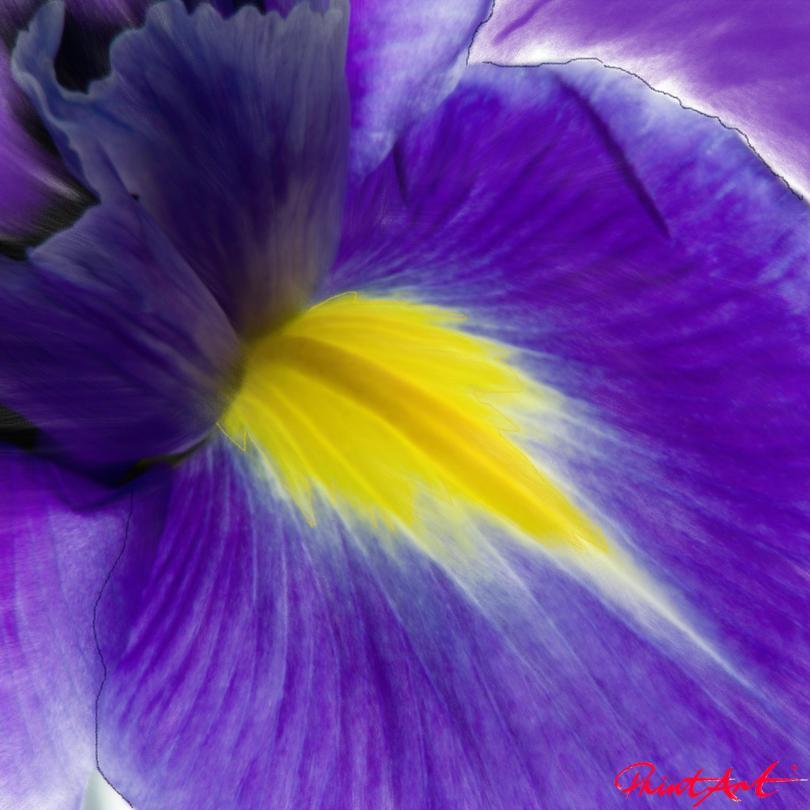 Lilie II Blumen