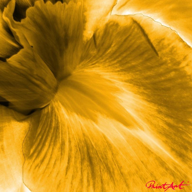 Lilie VII Blumen