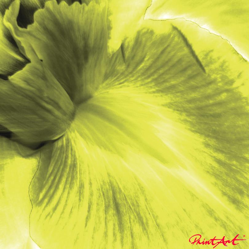 Lilie VIII Blumen