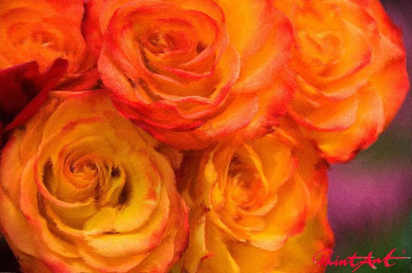 Roses Blumen