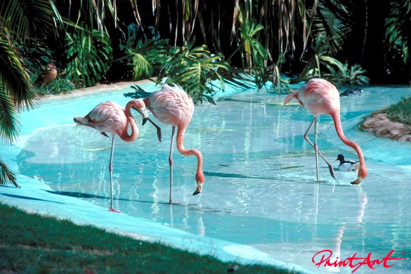 Flamingos Vögel