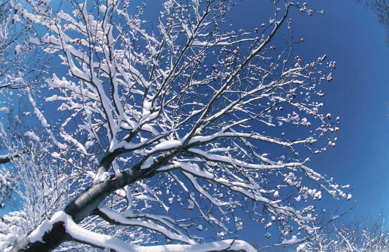 Schneebaum blauer Himmel Bäume