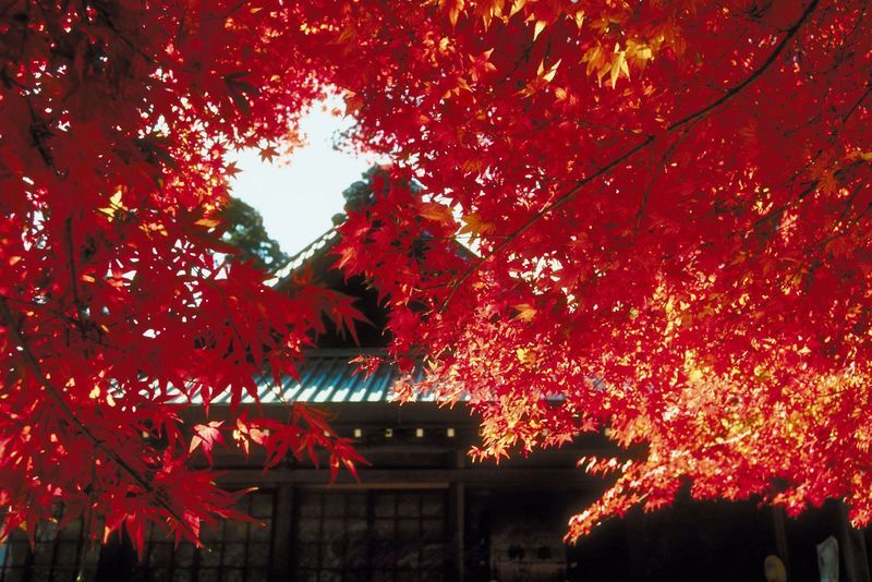 weinrot vor Tempel Bäume