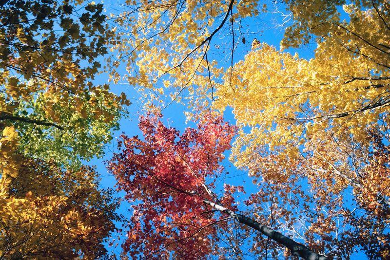 farbenfrohe Baumkronen Bäume