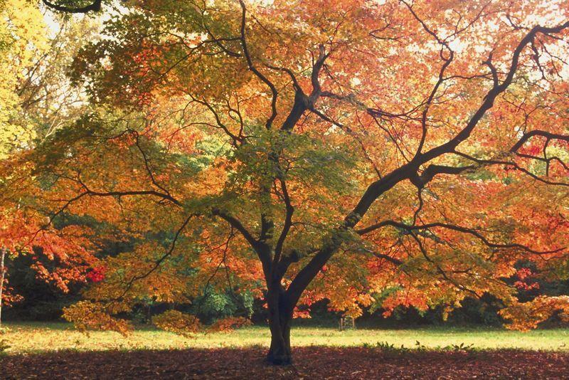 Herbstbaum Bäume