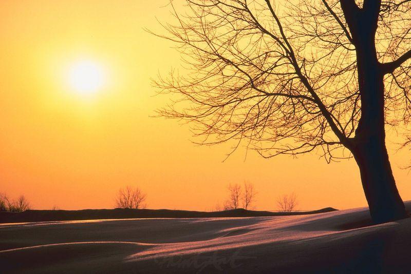 Sundown Bäume