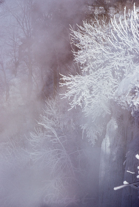 Nebelschnee Bäume