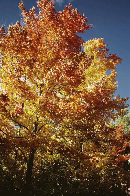 Herbstlich Bäume