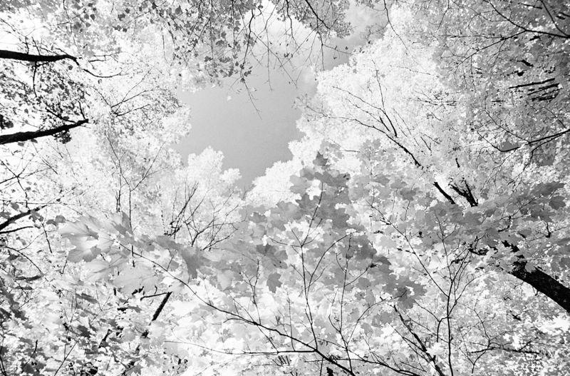 Baumkronen Bäume